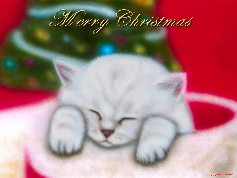 子猫の絵:Merry Christmas 〜チンチラ・シルバー〜