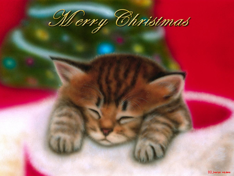 子猫の絵:Merry Christmas 〜チンチラ・ゴールデン〜