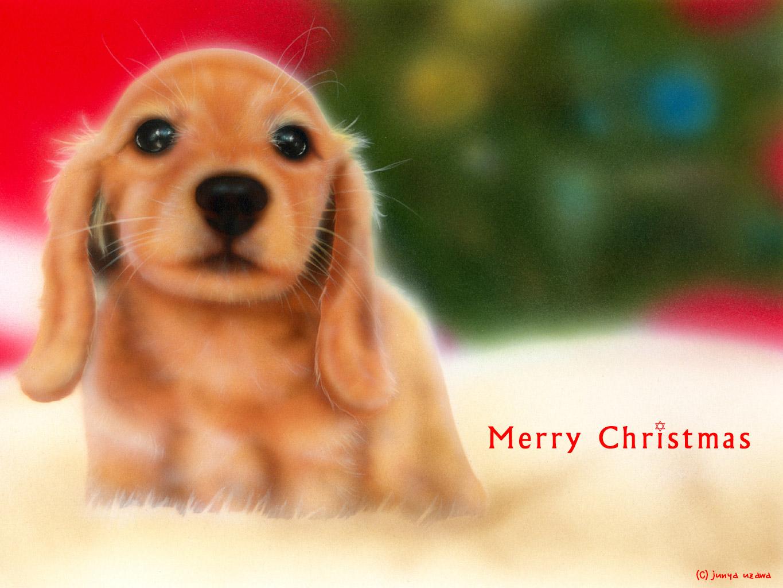 子犬の絵:Merry Christmas 〜ミニチュアダックスフンド〜