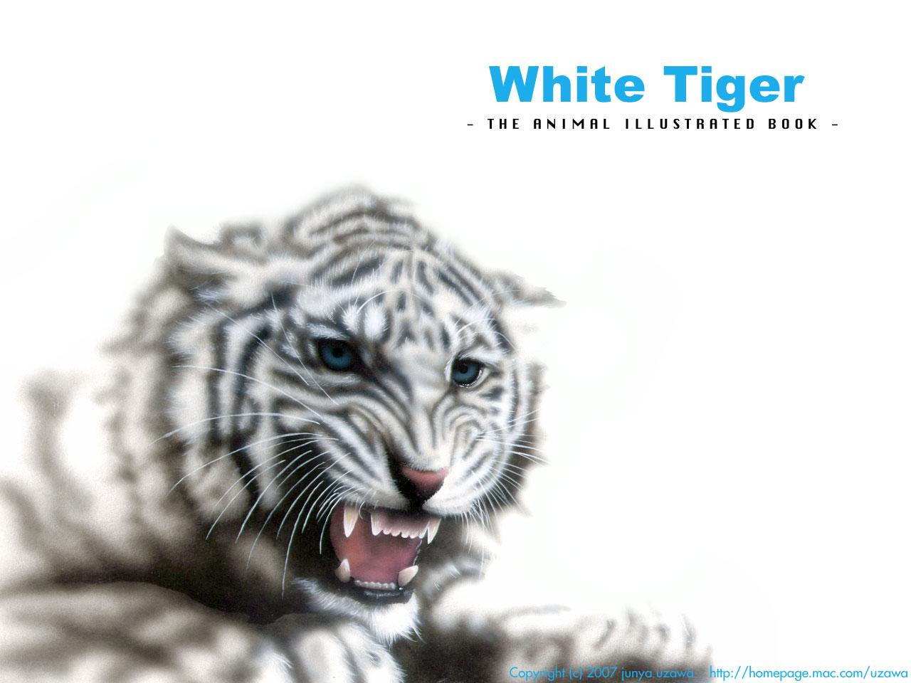 ホワイトタイガーの絵