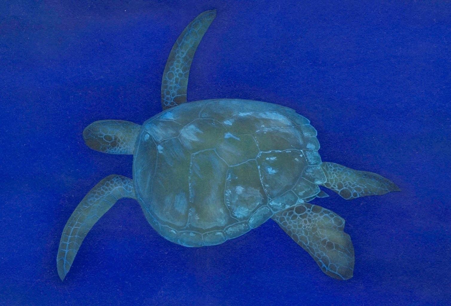 ウミガメの画像 p1_20
