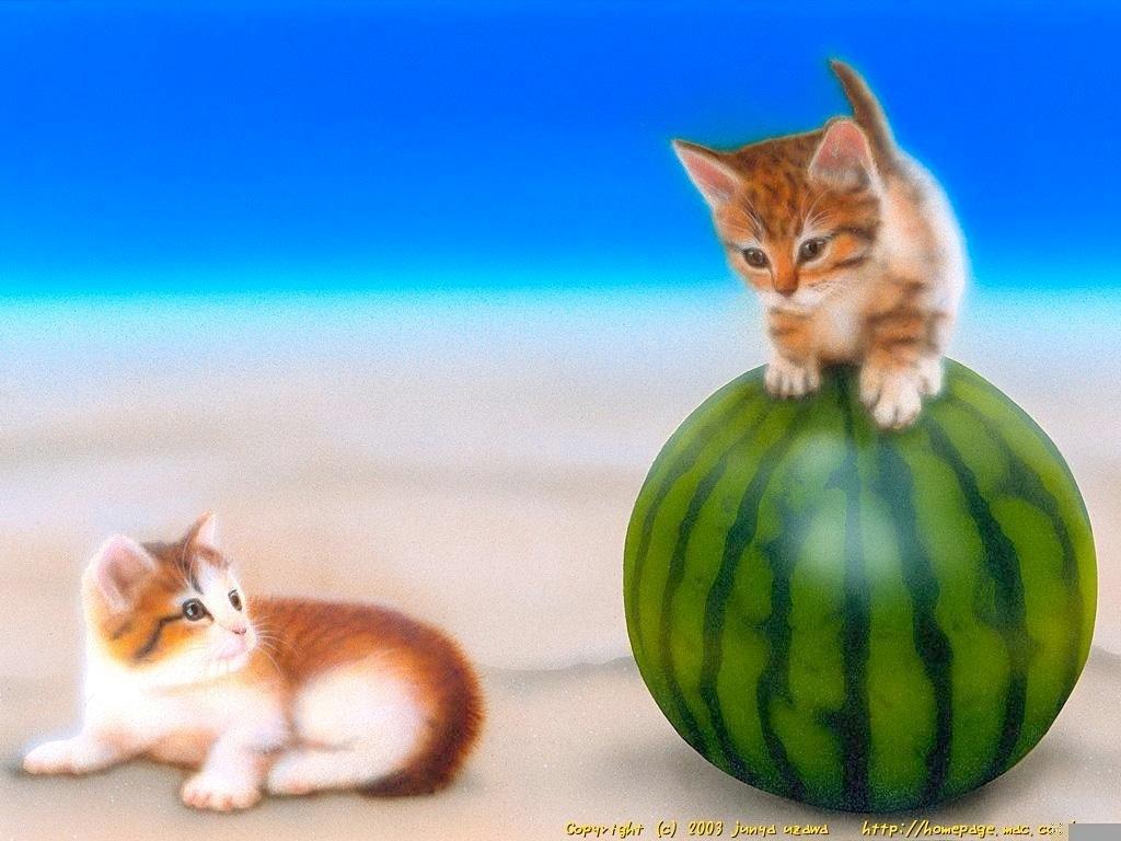 子猫の絵:「たまのり!」