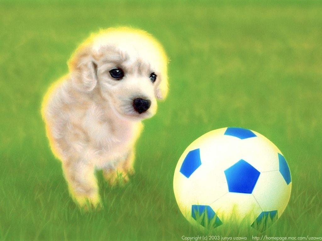 子犬の絵:Let's play sports !!