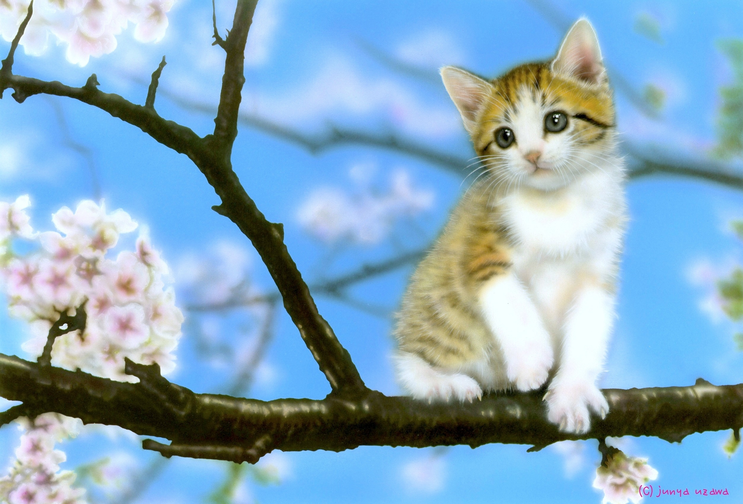 リアリズム絵画/動物の絵(動物イラスト)/子猫の絵/sakura(桜