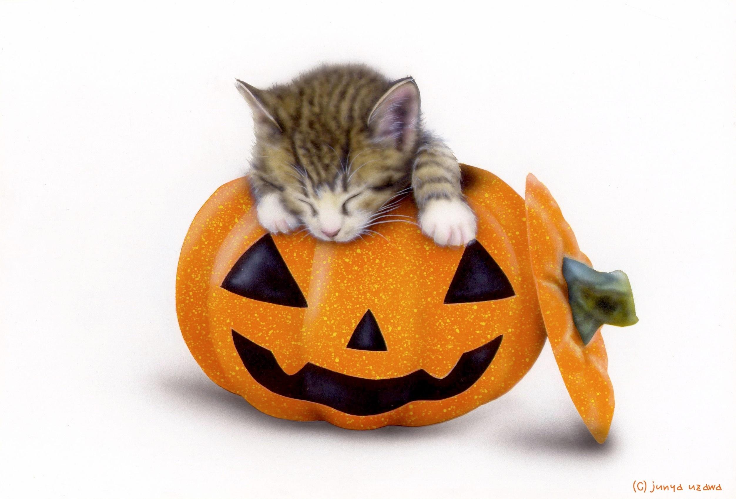 子猫の絵:Halloween Cat(最近お気に入りの寝床)