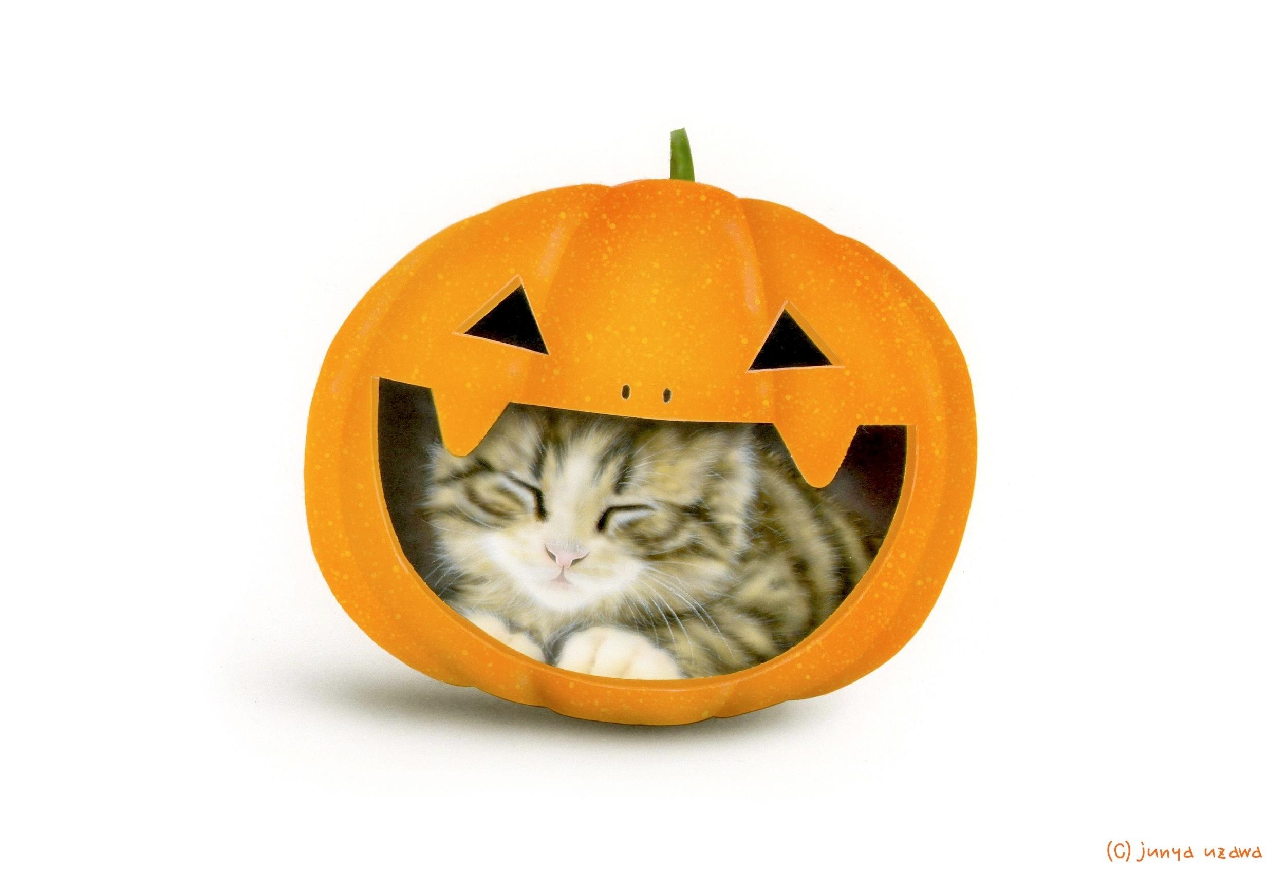 子猫の絵:Halloween Cat 2012(最近お気に入りの寝床)