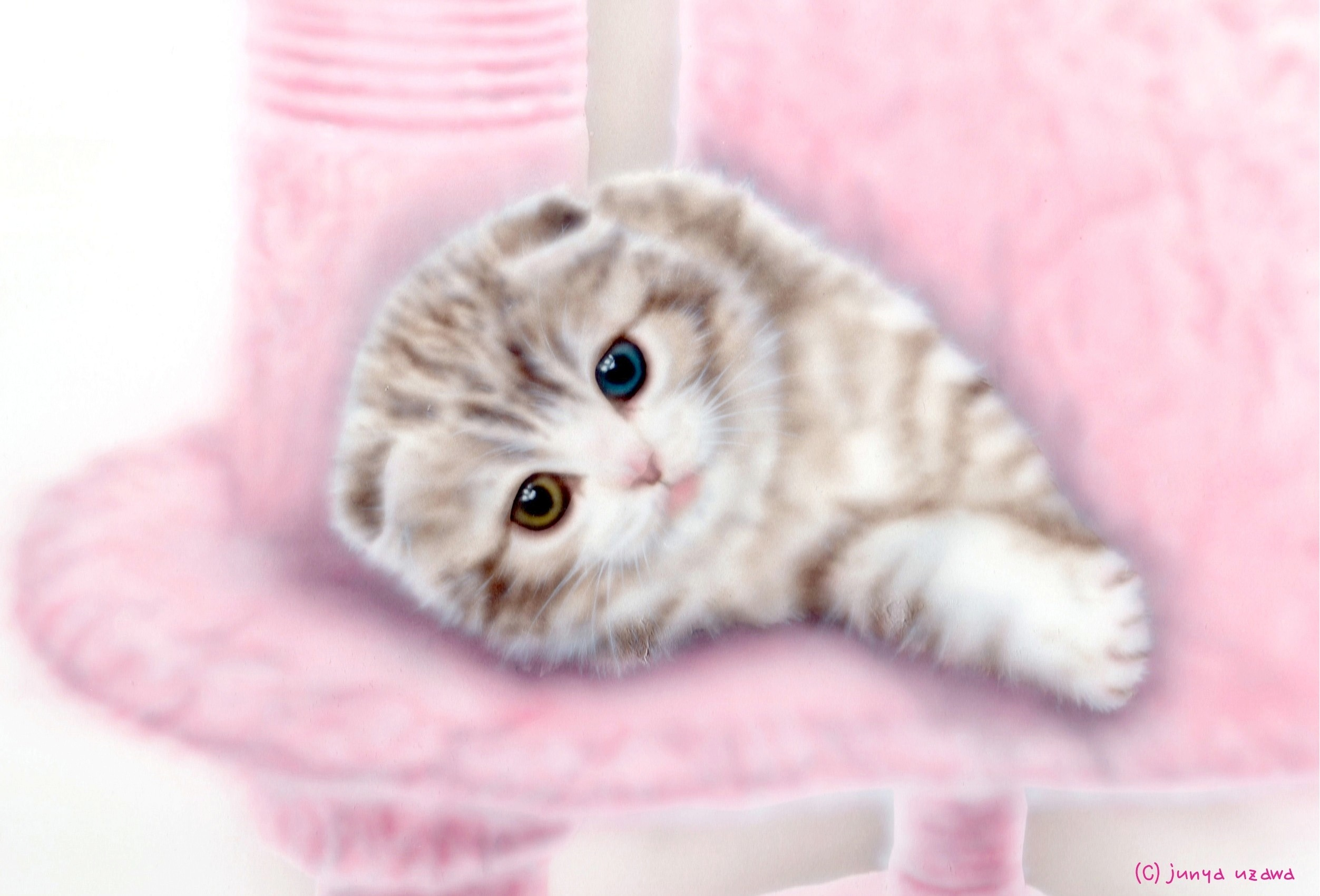 子猫の絵:スコティッシュ・オッドアイ Version 2